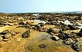 Coral Sea Beach at Chera Dwip, Saint Martin's Island (39633896435).jpg