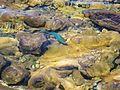 Corales en playa El Saco.JPG