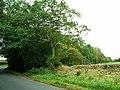 Corner of Drybeck Wood - geograph.org.uk - 808943.jpg