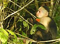 Costa Rica 43.DSCN4186-Mnew (31015349431).jpg