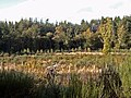 Craighead Wood - geograph.org.uk - 265130.jpg