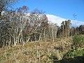 Craigiehowe - geograph.org.uk - 345341.jpg