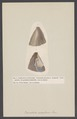 Crenatula - Print - Iconographia Zoologica - Special Collections University of Amsterdam - UBAINV0274 005 05 0013.tif