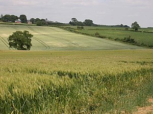 Crops. View from a bridleway. The different te...