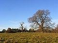 Crowsley Park - geograph.org.uk - 1059466.jpg