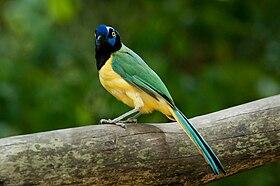 Yellow Bird Cafe Harrisburg Menu
