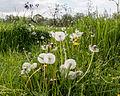 Dülmen, Weide am Naturschutzgebiet -Welter Bach- -- 2014 -- 0019.jpg