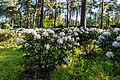 Dülmen, Welte, Rhododendronwald -- 2020 -- 6898.jpg