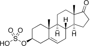 Prasterone sulfate - Image: DHEA sulfate