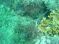 DSC00050 - peixe - Naufrágio e recifes de coral no Nilo.jpg