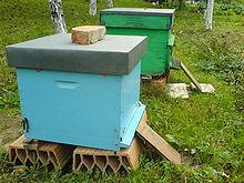 queen bee extractor instructions