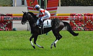 Danon Premium Japanese-bred Thoroughbred racehorse