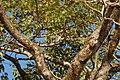 Dastoori Naka,Matheran - panoramio (64).jpg