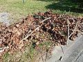 Dead foliage.jpg