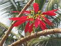 December flower.JPG