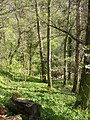 Deepdale Wood - geograph.org.uk - 7092.jpg