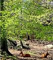 Deer (17150415047).jpg