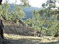 Deia olive trees.JPG