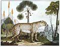 Der Gepard.jpg