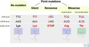 Silent mutation - Mutations