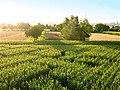 Ditzingen-maislabyrinth.jpg