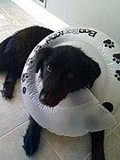 Soft Dog Cone Uk