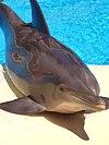 DolphinMirageVegas.jpg