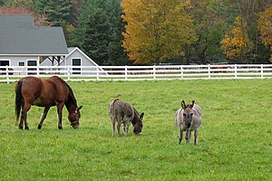 Horse care - Wood and wood-like synthetics are classic and attractive forms of fencing