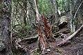 Dove Lake Circuit Walking Track, Cradle Mountain - Lake St Clair National Park 55.jpg