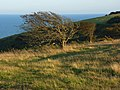 Downland near Eastbourne - geograph.org.uk - 948010.jpg