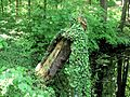 Drzewa w parku w Mosznej 02.jpg