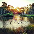 Duck pond sunset.jpg