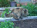 E9784-Katoomba-cat-called-Beautiful.jpg