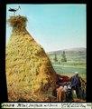 ETH-BIB-M'tal, Schilfhütte mit Storch-Dia 247-04000-1.tif