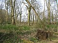 Early spring in the woods - geograph.org.uk - 1240498.jpg