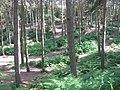 Earthworks in Perrywood - geograph.org.uk - 1371851.jpg