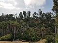 East Mira Mesa Canyon 2.jpg