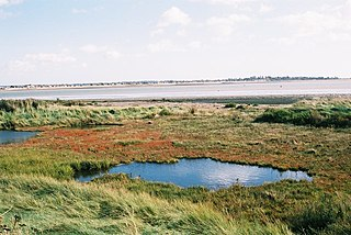 Colne Estuary biological and geological Site of Special Scientific Interest near Brightlingsea in Essex