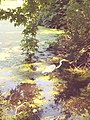 Egret in the Pool in Central Park 3.jpg