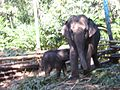 Elephant's family.jpg
