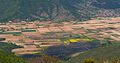 Elesko pole IMG 0062-crop.jpg