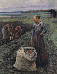 Potato Harvesters