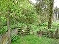 Enterng the woods near windcutter hill. - geograph.org.uk - 1302636.jpg