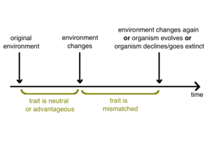 Evolutionary mismatch - Timeline showing a period of mismatch following an environmental change.
