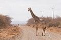 Exiting Amboseli (Kenya, Day 2).jpg
