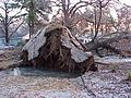 FEMA - 548 - Photograph by John Shea taken on 12-29-2000 in Arkansas.jpg