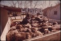 FUR BUYER WITH A LOAD OF DEER HIDES IN LEAKEY, NEAR SAN ANTONIO - NARA - 554952.tif