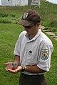 FWS Worker Holding Tern Chick (4856381707).jpg