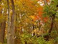 Fall Colors in Rock Creek Park - Flickr - treegrow.jpg