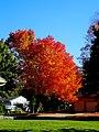 Fall Foliage - panoramio (14).jpg